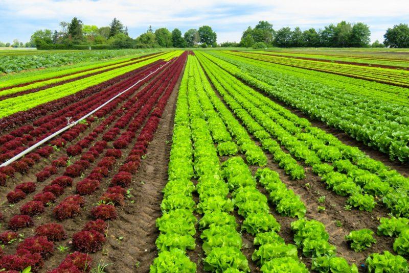 prodotti_agricoltura